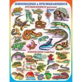 Плакат учебный детский 594*456мм Земноводные и пресмыкающиеся АВ-принт (1/10)