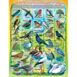 Плакат учебный детский 594*456мм Перелетно-кочующие птицы АВ-принт (1/10)