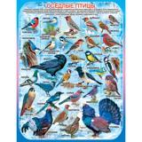 Плакат учебный детский 594*456мм Оседлые птицы АВ-принт (1/10)